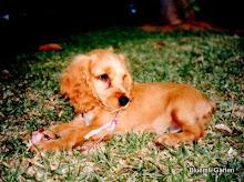 Rudi 3 Monate
