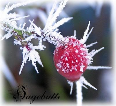 bluemli garten winter blumen im schnee mit bildern. Black Bedroom Furniture Sets. Home Design Ideas