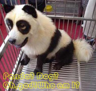 The Panda Dog Dog-11