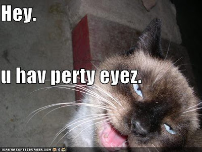 Page 3 crazy cat - Funny Pictures Lolcats 'n' Funny Pictures of