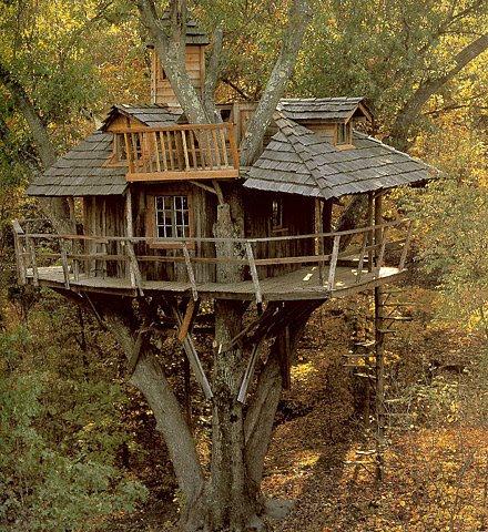 [treehouse+ffffound]