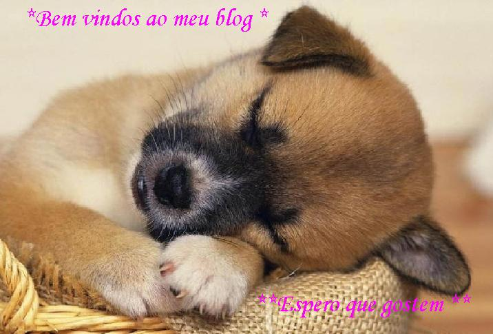 *** cãesinhos ***