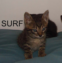 Surf - o gatinho chegado a aventuras