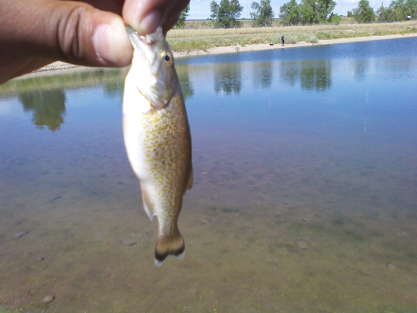 Late summer madness 8 27 10 8 30 10 fishin with j for Bass fishing in colorado