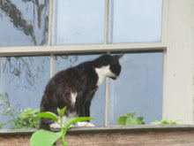 cat on the balcony.