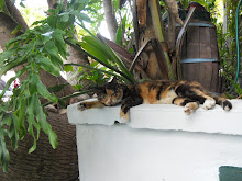 leave sleeping cats sleep!