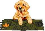 UN PO' DI ME: ad esempio il cucciolo che vorrei