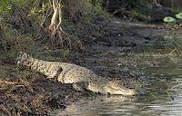 how to prevent crocodile