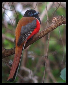 Nature India Tours Birding In Western Ghats Dandeli Wls