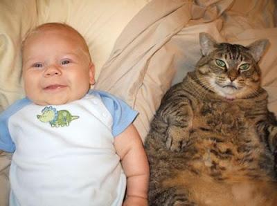 (megapost) gatitos y bebes
