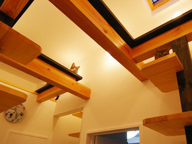 Divinos gatos una casa para gatos - Fotos de casas para gatos ...