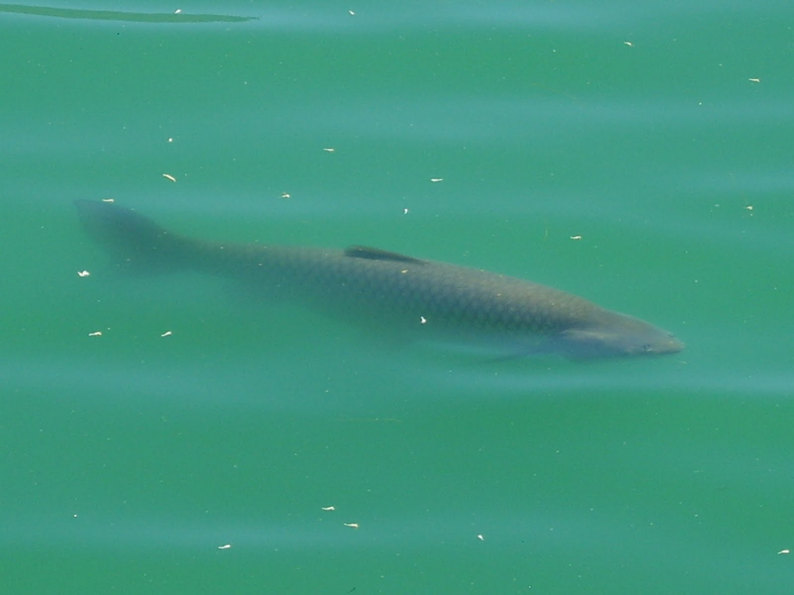 BevanResort: FISH STORY