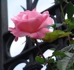 Una rosa para Laura, mi niña poeta