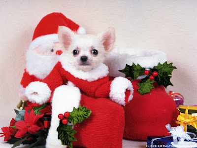 Christmas Puppy Desktop Theme