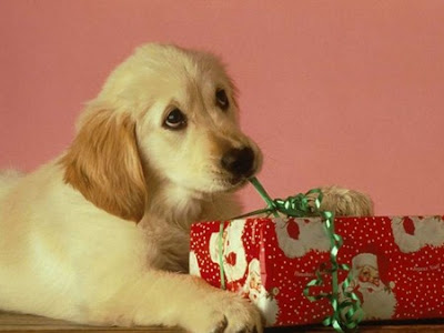 Christmas Puppy Desktop Theme Download
