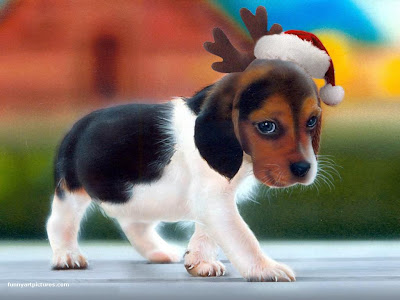 Download Christmas Puppy Desktop Theme Free