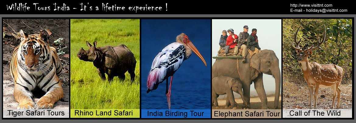 Wildlife Tours India : Wildlife Travel : Tiger Safari : National Park :  Sanctuaries : Indian