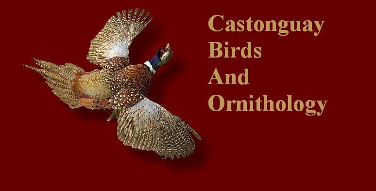 Castonguay Birds & Ornithology