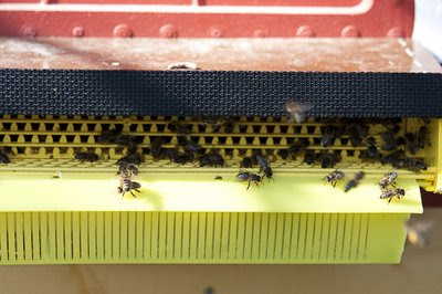 Pollenfällan stängd