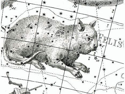 Felis en la Uranographia de Johann Bode ¿a que parece una rata?