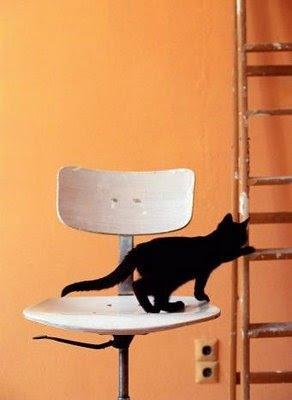Gato+escalera=peligro