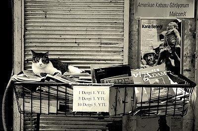Gato de Estambul