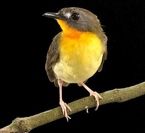 [uccello+bisjpg]