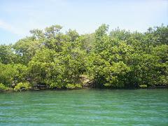 Cayo Caribe