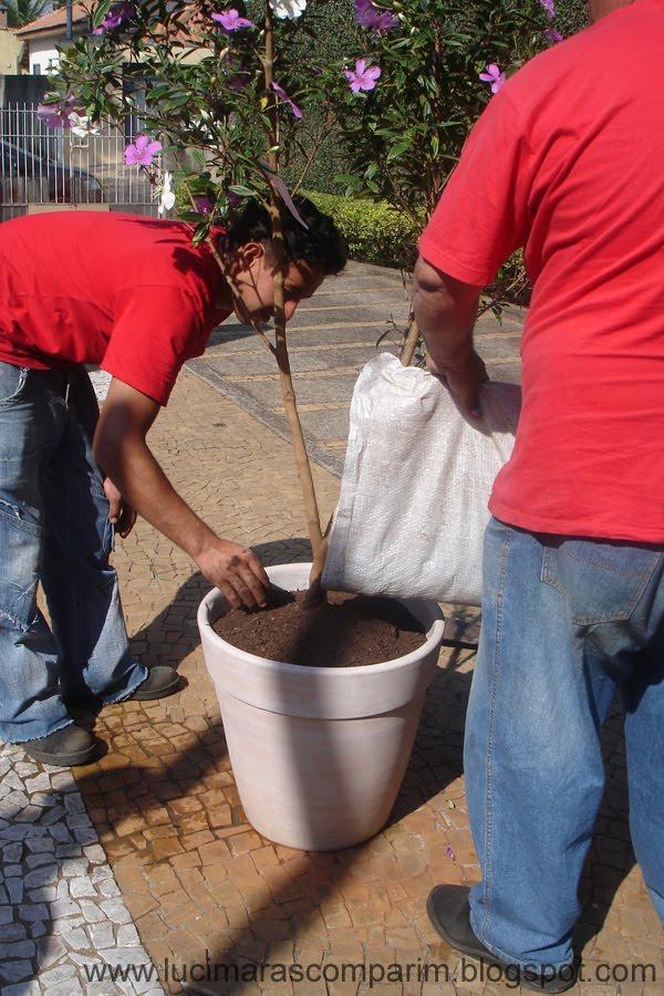 manaca de jardim em vaso : manaca de jardim em vaso:para o acabamento optei por casca de árvore depois de tudo pronto uma
