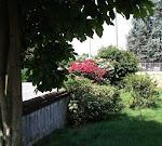 Un angolo del mio giardino