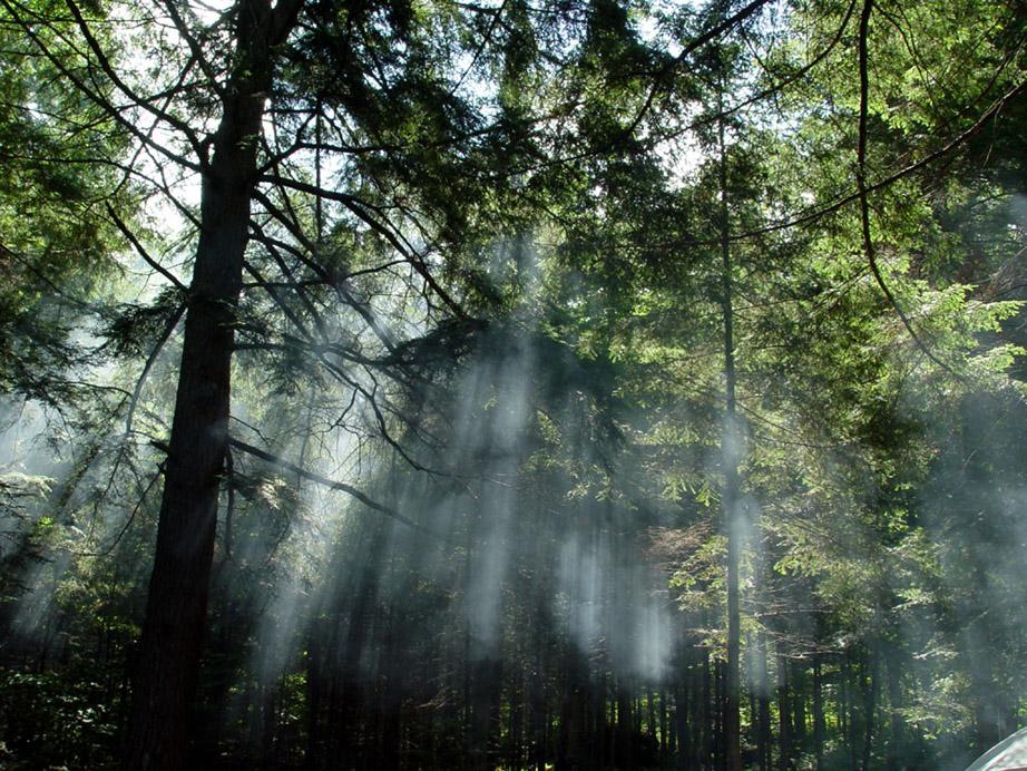 Briana – O verdadeiro nome de Sophie - Página 12 Floresta+fofinha