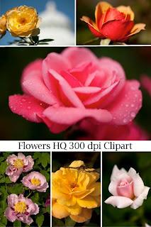Цветы в фотографиях большого разрешения пеяатного качества