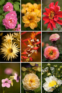 Фото клипарт цветы скачать высокого качества большого разрешения