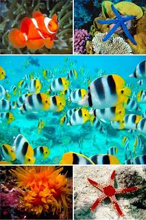 подборка красивых обоев для рабочего стола с видами подводного мира