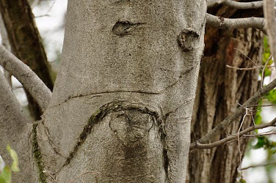 pohon yang bersedih