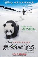 Trail of The Panda (2009) online y gratis