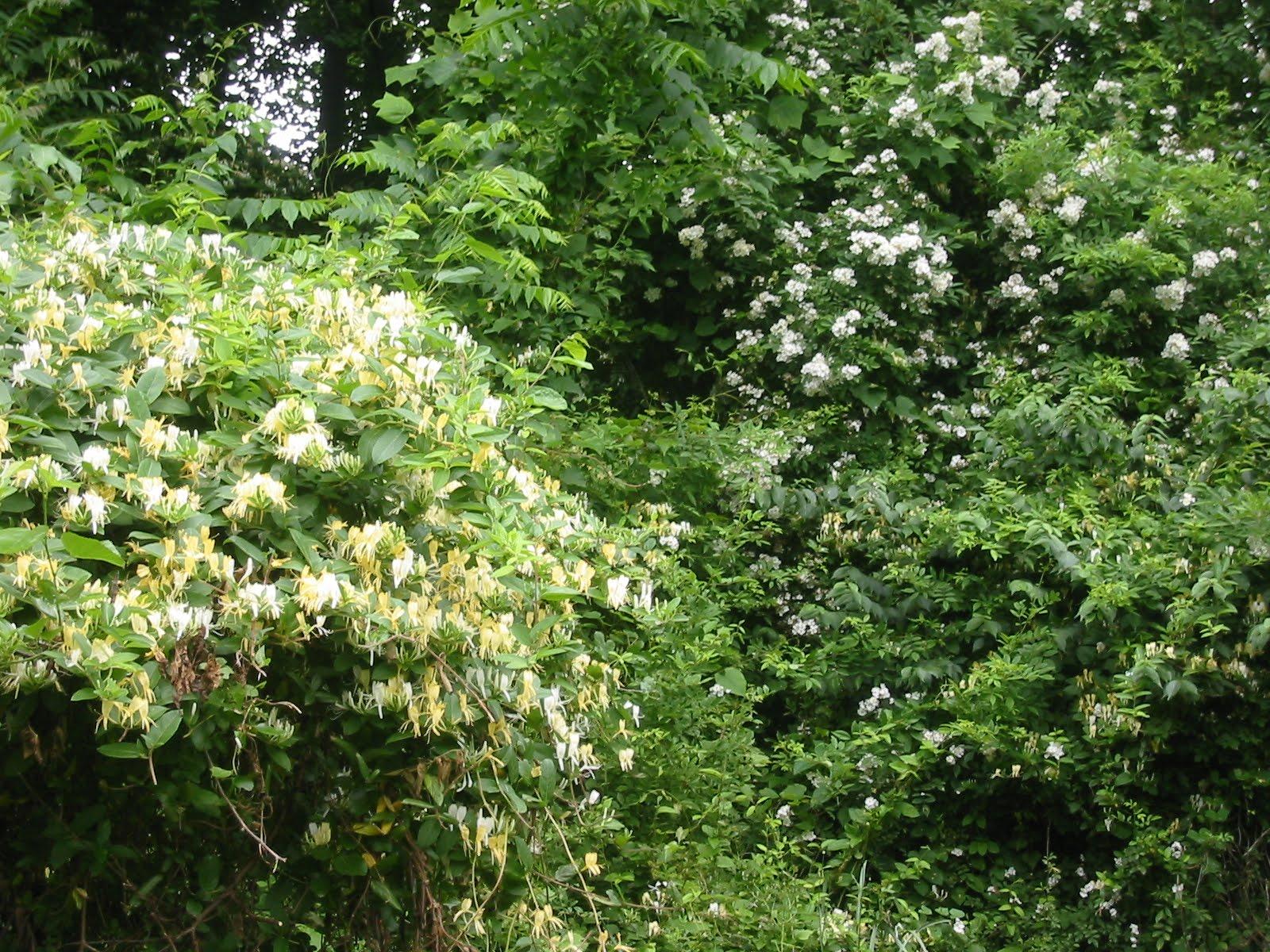 Connie Deamond Interior Creations Wild Flowering Vines & Bushes