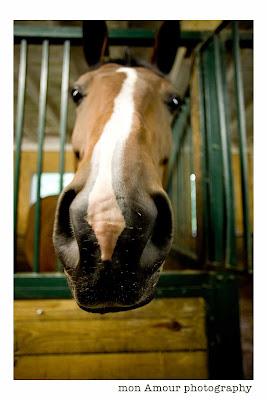 Horse Nose Photo
