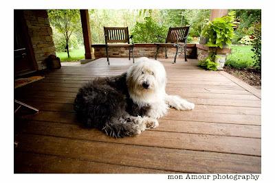 Dog Photo: Boomer