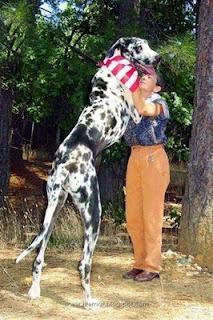 Anjing Terbesar urutan 9