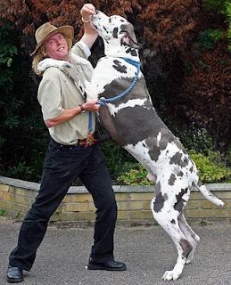 Anjing Terbesar urutan 6