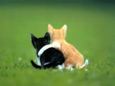 Homosexualidade felina