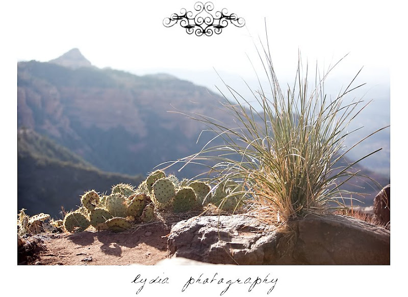 Cacti along the scenic route to Sedona Arizona
