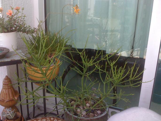 #5 Indoor Plants Decoration Ideas