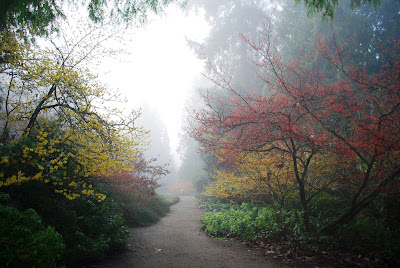 Washington Park Arboretum in Seattle, USA