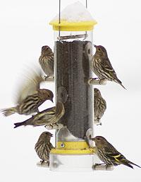 [Bird+Feeder.image]