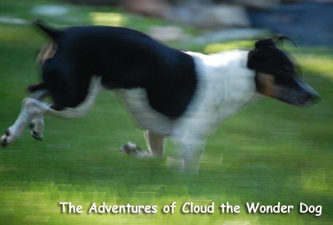 The Adventures of Cloud the Wonder Dog