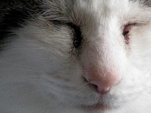 Black Crust Around Cats Eyes