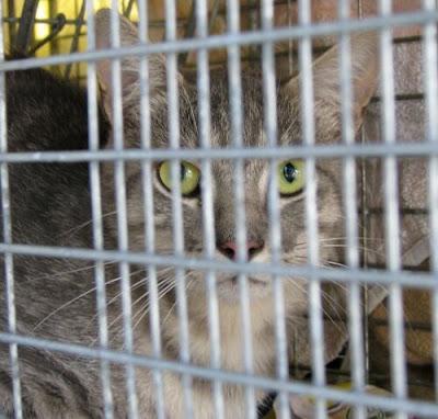 cat eyes close up. Cat Eyes---A Cat Woman#39;s