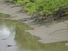 O rio.. o  mangue...